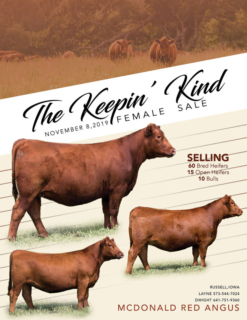 2019 McDonald Red Angus Keeping' Kind Female Sale